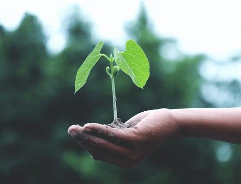sustainability and ecommerce 3
